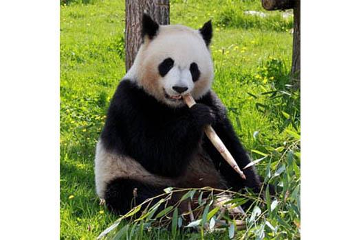 google panda indexing update 2015